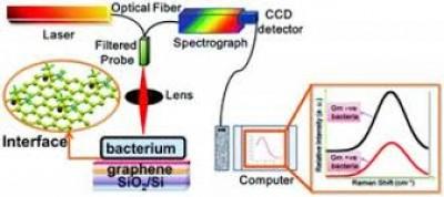 दुनिया का पहला विश्वसनीय बैक्टीरिया बायोसेंसर विकसित