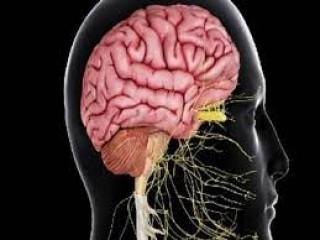 दिल्ली के निजी अस्पताल ने कोविड से उबरे मरीजों में तंत्रिका तंत्र संबंधी मामले बढ़ने की जानकारी दी