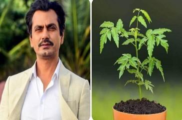 अभिनेता नवाजुद्दीन सिद्दिकी ने अपने गांव के लोगों से पेड़ लगाने की अपील की